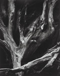 Photographs, Ansel Adams (American, 1902-1984). Sequoia Roots, Mariposa Grove, Yosemite National Park, California (from Portfolio F...