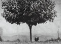 Photographs:Gelatin Silver, Edouard Boubat (French, 1923-1999). L'Arbre et la Poule,1950. Gelatin silver, printed later. 10-3/4 x 15 inches (27.3 x...