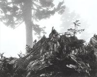 Ansel Adams (American, 1902-1984) Tree, stump and mist, Northern Cascades, Washington, 1958 Gelatin