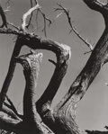 Photographs, Edward Weston (American, 1886-1958). Cypress, Point Lobos, 1930. Gelatin silver, 1955. 9-1/2 x 7-1/2 inches (24.1 x 19.1...