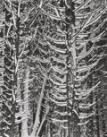 Photographs:Gelatin Silver, Ansel Adams (American, 1902-1984). Winter, Forest Detail, Yosemite Valley, 1949. Gelatin silver, printed later. 13-1/4 x...