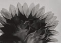 Photographs:Gelatin Silver, Yasuhiro Ishimoto (American, 1921-2012). A Group of FourPhotographs of Flowers, circa 1987. Gelatin silver. 6 x 8-3/8i... (Total: 3 Items)
