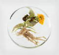 Glass, Paul Stankard (American, b. 1943). Bees and Corpses Paperweight, 1995. Flameworked clear and colored glass. 3 inches dia...