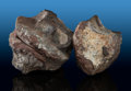 Fossils:Dinosauria, Dinosaur Vertebrae (Set of 2). Jurassic. Morrison Formation.Utah, USA. ... (Total: 2 Items)