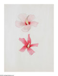 American:Modern, JOSEPH STELLA (American 1877-1946). Two Hibiscus.Silverpoint and crayon on paper. 13.25in. x 10.25in.Provenance:Estate...
