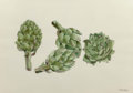 Works on Paper, Joe DiGiorgio (1931-2000). Artichoke, Broccoli, and Squash (three works). Watercolor and pencil on paper, each. 16-1... (Total: 3 Items)