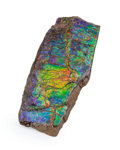 Fossils:Cepholopoda, Ammolite Fossil. Placenticeras sp.. Cretaceous. BearpawFormation. Southern Alberta, Canada. 4.15 x 1.81 x 0.47 inches(10...