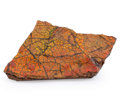 Fossils:Cepholopoda, Ammolite Fossil. Placenticeras sp.. Cretaceous. BearpawFormation. Southern Alberta, Canada. 5.84 x 3.07 x 0.39 inches(14...
