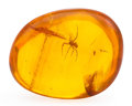 Amber, Amber with Inclusions. Hymenaea protera. Oligocene.Dominican Republic. 1.07 x 0.87 x 0.48 inches (2.73 x2.20...
