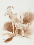 Fine Art - Work on Paper, Ken Carlson (American, b. 1937). Bighorn Sheep Ewe and Lamb.Conte crayon on paper. 12-1/4 x 9-1/4 inches (31.1 x 23.5 c...