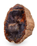 "Fossils:Paleobotany (Plants), Petrified Wood ""Stump"". Araucarioxylon. Triassic. ChinleFormation. Arizona, USA. 5.91 x 3.74 x 2.95 inches (15.00 x9.50..."