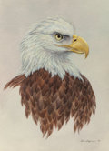 Works on Paper, John Lofgreen (American, 20th Century). Bald Eagle, 1982. Acrylic on paper. 20 x 15 inches (50.8 x 38.1 cm). Signed and ...
