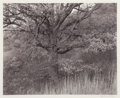 Photographs, George A. Tice (American, b. 1938). Oak Tree, Holmdel, New Jersey, 1970. Gelatin silver, 1980. 10-3/8 x 13 inches (26.4 ...