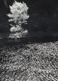 Photographs:Gelatin Silver, Edward Steichen (American, 1879-1973). The Little Shadow, Treein Spring, Connecticut, 1960. Gelatin silver. 10 x 7 inch...