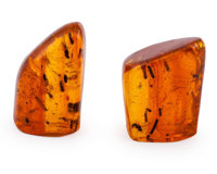 Amber with Inclusions Hymenaea protera Oligocene Dominican Republic 1.43 x 0.83 x 0.83 inches (3.62 x