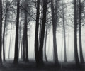 Photographs:Gelatin Silver, Don Worth (American, 1924-2009). Trees and Fog, SanFrancisco (two photographs), 1962; 1971. Gelatin silver.17 x 20... (Total: 2 Items)