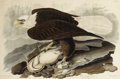 Fine Art - Painting, American, After JOHN JAMES AUDUBON (American 1785-1851). White-HeadedEagle (Plate XXXI), 1828. Handcolored engraving with etching...