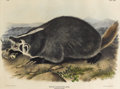 Prints, After JOHN JAMES AUDUBON (American 1785-1851). American Badger, 1844. Hand colored lithograph on wove paper. 22 x 28 inc...