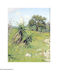 Texas:Early Texas Art - Impressionists, Noe Perez Blooming Yuccas, 2005 Oil on canvas board 14 x 11in.Signed lower right: N. Perez '05 Inscribed verso: ...