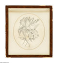 American:Still Life, Margaret Van Dyck Lilies, c.1900 Pencil on paper 13in. x 11in.(oval) Unsigned Inscribed verso: Property of Mrs. Charle...