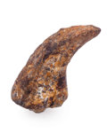 Fossils:Dinosauria, Dimetrodon Claw. Permian. Texas Red Beds Formation. NorthernTexas, USA. 1.00 x 0.49 x 0.31 inches (2.54 x 1.24 x 0.78cm)...