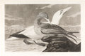 Books:Prints & Leaves, John James Audubon. Gannet. Plate 326. London: R. Havell, 1836. Uncolored engraving featuring an adult male and young gannet...