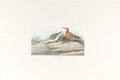 Books:Prints & Leaves, John James Audubon. Pigmy Curlew, Plate 263. London: R. Havell, 1835. Hand-colored engraving, featuring pigmy cu...