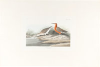 John James Audubon. Pigmy Curlew, Plate 263. London: R. Havell, 1835. Hand-colored e