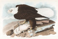 Books:Prints & Leaves, John James Audubon. White-Headed Eagle, Plate 31, No. 7. London: R. Havell, [1828]. Hand-colored engraving, ...