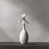Robert Mapplethorpe (American, 1946-1989) Orchid, 1982 Gelatin silver 15-1/8 x 15-1/8 inches (38