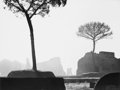 Photographs:Gelatin Silver, George Everard Kidder Smith (American, 1913-1997). On PalantineHill, Rome, 1950. Gelatin silver. 10-3/4 x 14 inches (27...