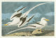 After John James Audubon (American, 1785-1851) Tropic Birds (No. 53, Plate CCLXII) Offset lithograph in colors on pape...