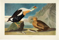 Books:Natural History Books & Prints, John James Audubon. The Birds of America. Twenty large prints from the Amsterdam Edition. 1971-1972....