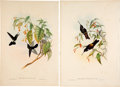Books:Natural History Books & Prints, John Gould. Five Hummingbird Prints with hand-coloring. London: 1887.... (Total: 5 Items)