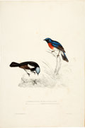 Books:Natural History Books & Prints, John Gould. Five Ornithological Lithographic Prints with hand-coloring. c. 1840s....