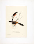 Books:Natural History Books & Prints, John Gould and others. Five Ornithological Lithographic Prints with hand-coloring. c. 1840s....