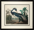 Books:Natural History Books & Prints, John James Audubon. Louisiana Heron. London: Robert Havell,[no date]. Original hand-colored engraving with aquatint...