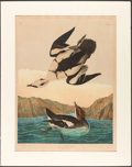 Books:Natural History Books & Prints, John James Audubon. Smew or White Nun. New York: Julius Bien, 1860. Chromolithograph....