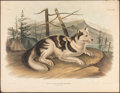Books:Natural History Books & Prints, John James Audubon. Hare-Indian Dog. Philadelphia: J.T. Bowen, 1848. Hand-colored Lithograph....
