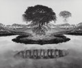 Photographs, Jerry Uelsmann (American, b. 1934). Untitled (Floating tree andpea pod), 1969. Gelatin silver. 7-3/4 x 9-1/4 inches (19...