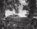 Photographs, Wynn Bullock (American, 1902-1975). Twin Oaks, California, 1956. Gelatin silver, printed later. 7-1/2 x 9-1/2 inches (19...