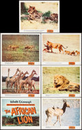 """Movie Posters:Documentary, The African Lion (Buena Vista, 1955). Title Lobby Card & Lobby Cards (6) (11"""" X 14""""). Documentary.. ... (Total: 7 Items)"""