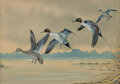 American:Sporting, Harry Curieux Adamson (American, 1916-2012). Pintails.Gouache on board. 9 x 12-1/2 inches (22.9 x 31.8 cm). Signedlowe...