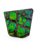 Fossils:Cepholopoda, Ammolite Fossil. Placenticeras sp.. Cretaceous. BearpawFormation. Southern Alberta, Canada. 1.54 x 1.59 x 0.19 inches(3....