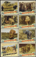 """Movie Posters:Documentary, Wild Beasts at Bay (Cosmopolitan, 1947). Lobby Card Set of 8 (11"""" X 14""""). Documentary.... (Total: 8 Items)"""