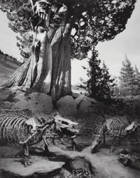 Jerry Uelsmann (American, b. 1934) Untitled (Weston's Tree), 1990 Gelatin silver 19-1/4 x 15-3/8