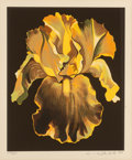 Fine Art - Work on Paper:Print, Lowell Nesbitt (American, 1933-1993). Yellow Iris, 1980. Screenprint in colors on paper. 22 x 15 inches (55.9 x 38.1 cm)...