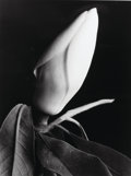 Photographs, Imogen Cunningham (American, 1883-1976). Magnolia Bulb 2, circa 1920s. Gelatin silver, printed later. 13-1/4 x 10 inches...