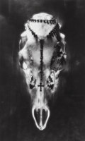 Photographs:Gelatin Silver, Ruth Bernhard (American, 1905-2006). Skull and Rosary, 1946. Gelatin silver. 13-1/2 x 8-1/4 inches (...