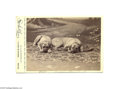 """Photography:Cabinet Photos, Cabinet Card of Two Dogs, """"Plato"""" and """"Grover Cleveland"""" An excellent posed, studio photograph of two very bored-looking dog..."""